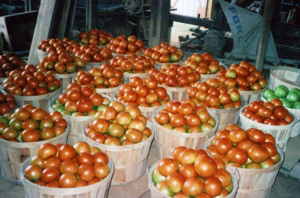 Grainger County Tomatoes